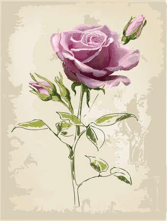 vintage rose: Rose