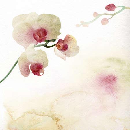 element: Watercolor flowers orchid