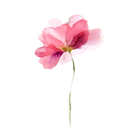 Beautiful watercolor flowers Stock Photo