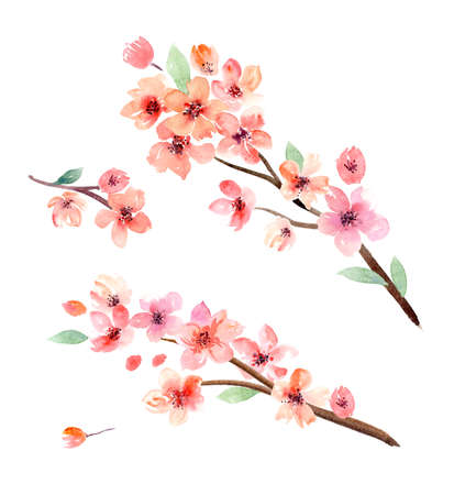 Watercolor flowers. Sakura. Set of watercolor flowers, leaves and branches