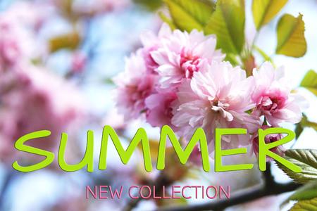 Sakura, beautiful pink flowers. Summer concept. Text Summer New Collection