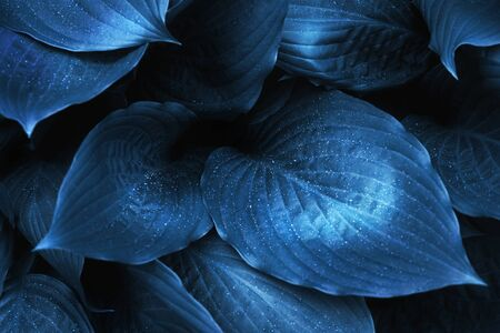Foliage with raindrops. Close up. Color of the year 2020.