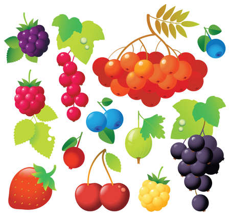 Sweet ripe berries in one file: ashberry, gooseberry, red currants, black currants, blueberry, cowberry, cherry, blackberry. Fresh and tasty. Stock Vector - 4880331