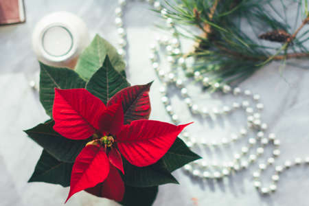 Closeup Christmas background with poinsettia Cozy New Year