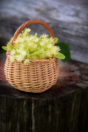colic: medical linden flowers harvest wicker basket on summer grass Stock Photo
