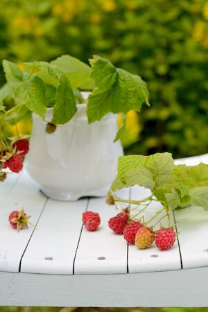curative: Branches of bush raspberry in a white cheap cup Stock Photo