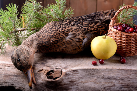 a wounded wild duck hunter on a wooden background photo