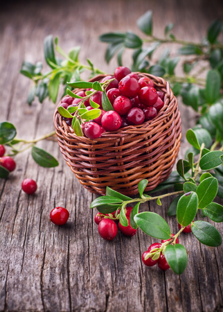fresh: Basket with ripe fresh forest cranberries on the texture wooden background. selective Focus
