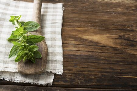 A branch of fresh oregano on an old rustic wooden spoon on cotton napkin and a dark wooden background. selective focus