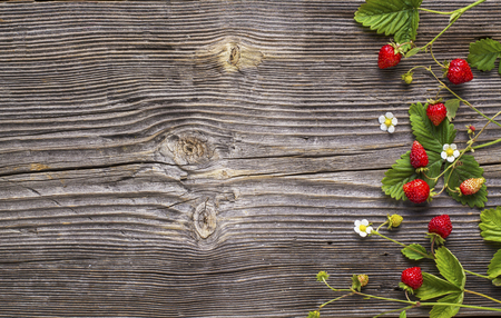 'wild strawberry: Fresh wild strawberry with leaves and flowers on a simple dark wooden structural background top view. Stock Photo