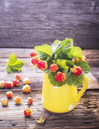 chicouté: Sprigs northern cloudberry keep pace with red berries in a ceramic mug on a simple wooden background. Useful rare berries growing in the north