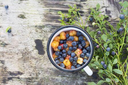chicouté: Tasse blanche d'émail sur fond gris en bois dans une forêt pleine de bleuets nord et juteux chicouté mûrs. Le concept de nourriture saisonnière organique naturel sain.
