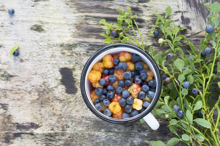 blueberry bushes: White enamel mug on wooden gray background in a forest full of ripe cloudberry northern and juicy blueberries. The concept of healthy organic natural seasonal food.