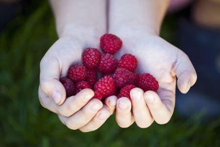 Fresh rasberries on childs hands