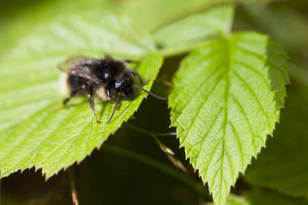 macrophotography: Macro photography of a little bee in a garden Stock Photo
