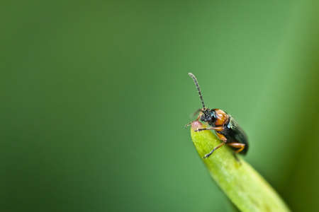 macrophotography: Macro photography of a little insect Stock Photo
