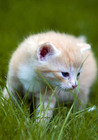 Little cat in a green grass Stock Photo - 13225554