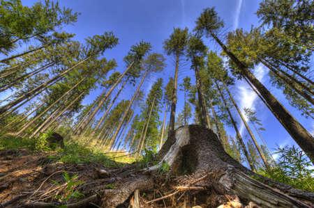 Beautiful landscape photo of woods taken in Beskidy mountains - Wielka Racza, during summer. Imagens