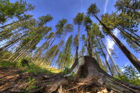 Beautiful landscape photo of woods taken in Beskidy mountains - Wielka Racza, during summer. Banque d'images