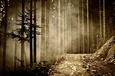 Beautiful landscape photo taken in woods Beskidy mountains - Wielka Racza, during summer. Imagens