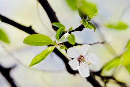 macrophotography: Macro photography of beautiful flowers Stock Photo