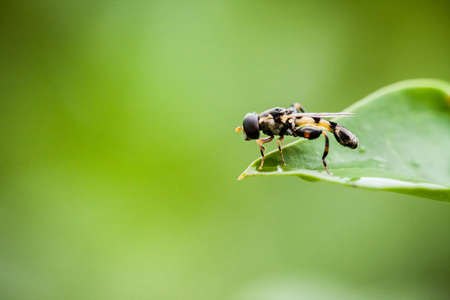 macrophotography: Macro photography of little fly in nature