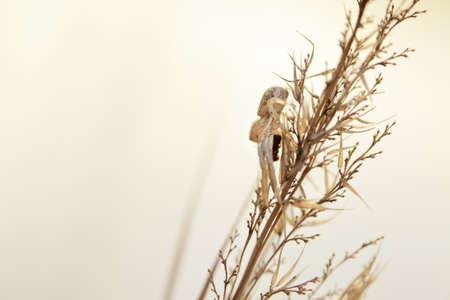 macrophotography: Macro photography of little spider