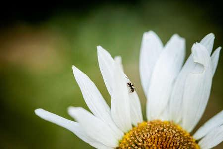 macrophotography: Macro photography of little insect