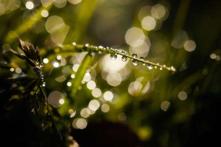 Macro photography of waterdrops in nature