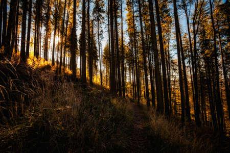 Warm autumn landscape photo taken in woods, in polish Beskidy mountains, Karkoszczonka Stock Photo