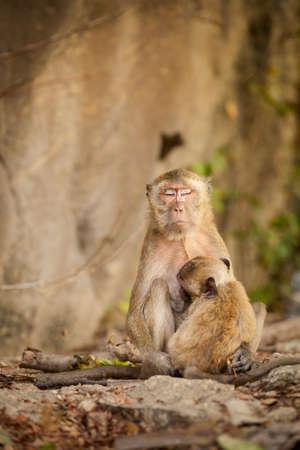 hua hin: Monkey in Khao Takiab temple in tahi Hua Hin. Fauna of south east Asia. Stock Photo
