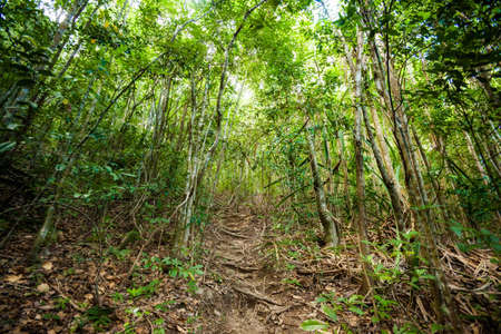 phangan: Jungle trekking on tropical island Koh Phangan in Thailand. Nature of south east asia. Stock Photo