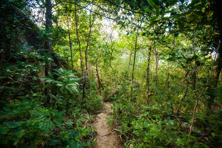 Jungle trekking on tropical island Koh Phangan in Thailand. Nature of south east asia. Imagens