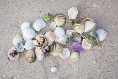 Selection of colorful shells on tropical island Koh Phangan in Thailand. Chalokum beach. photo