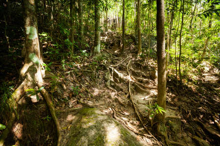south east asia: Jungle trekking on tropical island Koh Phangan in Thailand. Nature of south east asia. Stock Photo