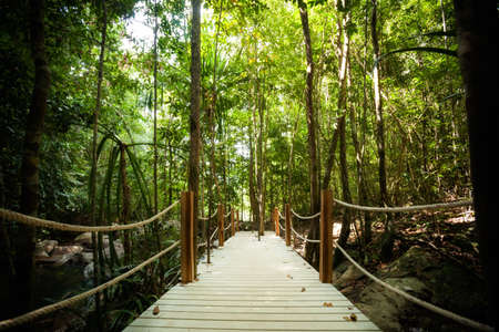 Jungle trekking on tropical island Koh Phangan in Thailand. Nature of south east asia. photo
