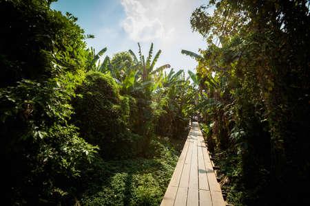 thailand view: Beautiful path in Thailand view - banana palms, thai flora