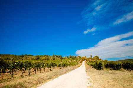 italian landscape: Colorful panoramic view in Tuscany - vineyards close to Montalcino, Italy.