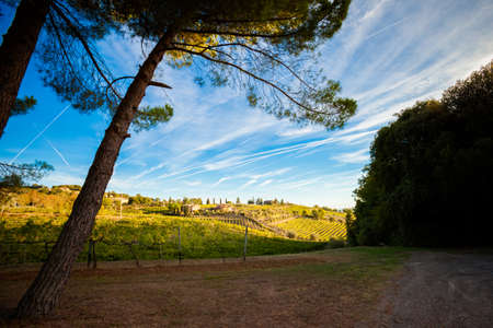 montalcino: Colorful panoramic view in Tuscany - vineyards close to Montalcino, Italy.