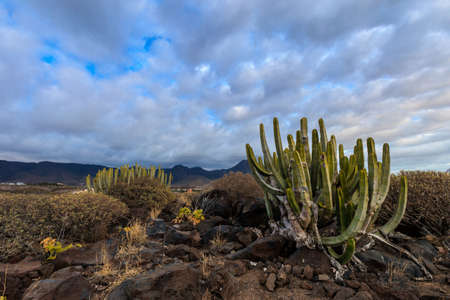 adeje: Summer seascape on tropical island Tenerife, Canary in Spain. Costa Adeje view with prickly pear Cactus Stock Photo
