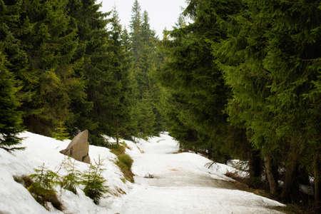 poco: paisaje escénico hermoso en Beskid montañas. Rysianka con un poco de nieve en el comienzo de la primavera.