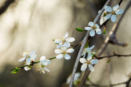 macrophotography: Macro photography of beautiful blooming springtime flowers - sign of spring season.