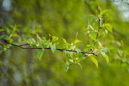 macrophotography: Macro photography of beautiful springtime nature details