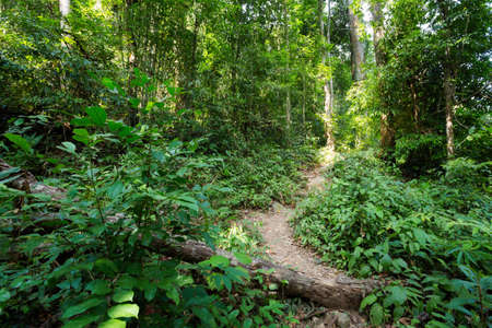 klong: Jungle trekking to klong jao leuam waterfall on tropical koh Chang island  in Thailand. Bush landscape during summer. Stock Photo