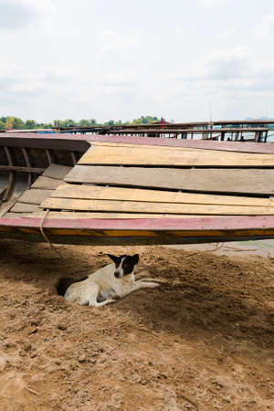 Familiar dog hiding under wooden boat on Don Det island in south Laos. Life on four thousands islands Si Phan Don on Mekhong river in south east asia during summer. Banco de Imagens