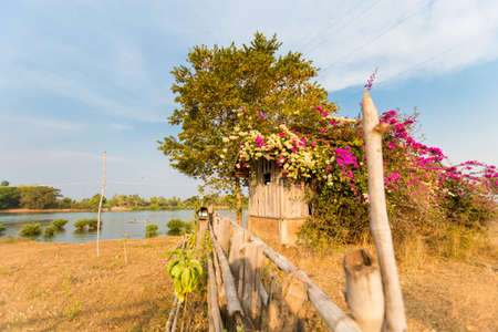 Dirt path across village on Don Det island in south Laos. Landscape of nature taken on four thousands islands Si Phan Don on Mekhong river in south east asia during summer.