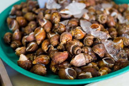 Fresh raw asian mussels in shells on local market in Krabi town. Traditional thai cuisine made of fresh ingredients.