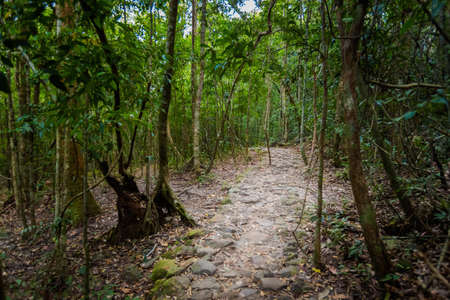 Summer landscape on tropical Phu Quoc island in Vietnam. Beautiful panorama of jungle trek to Suoi Tranh waterfall, An Thoi district.