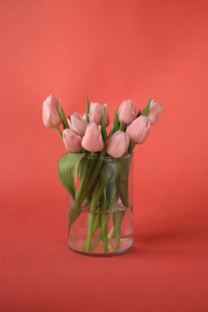 A beautiful bunch of pink tulips laying on pink background.