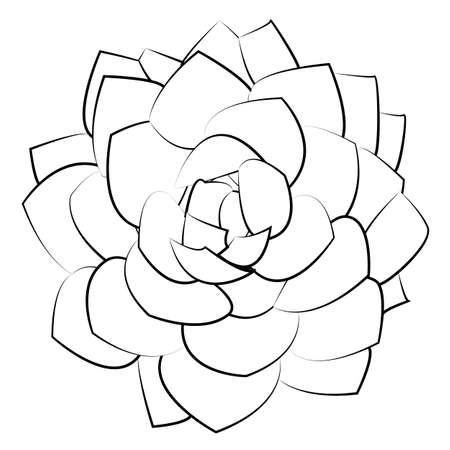 springtime: vector illustration succulent